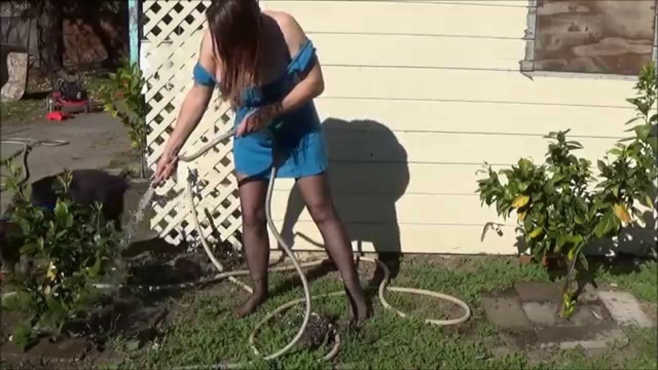 Sexy Jenn watering the Citrus Tree's wearing Pantyhose,no Shoes